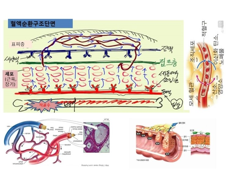 blood flow 몸을 살리는 공식(몸살공)   왜 아플까? 의 원인과 답을 찾다!