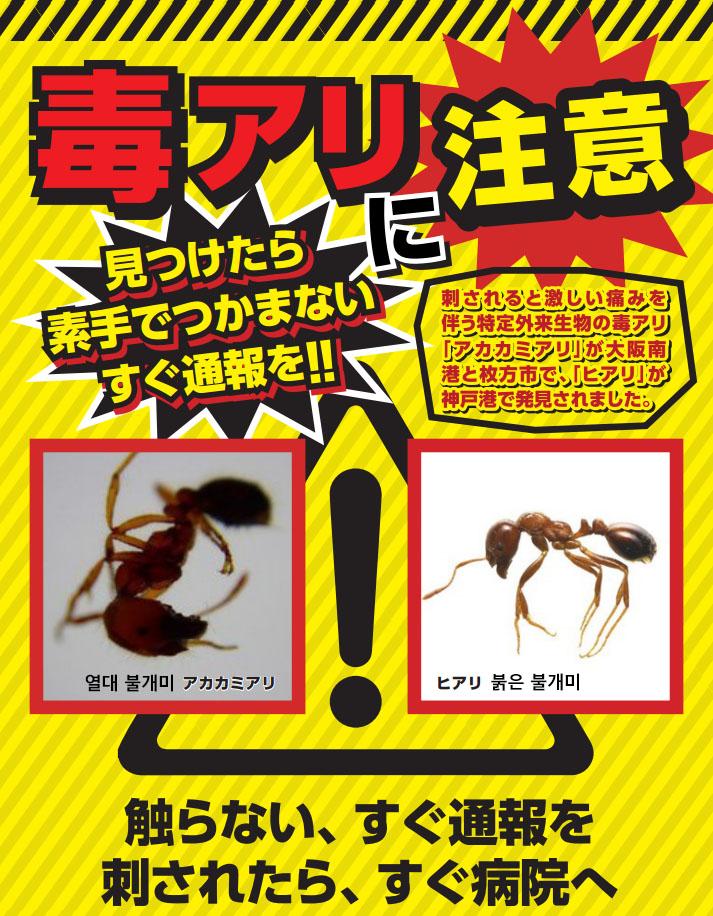붉은 불개미 포스터 붉은 불개미 요코하마에서도 발견! 물리면 두드러기가..