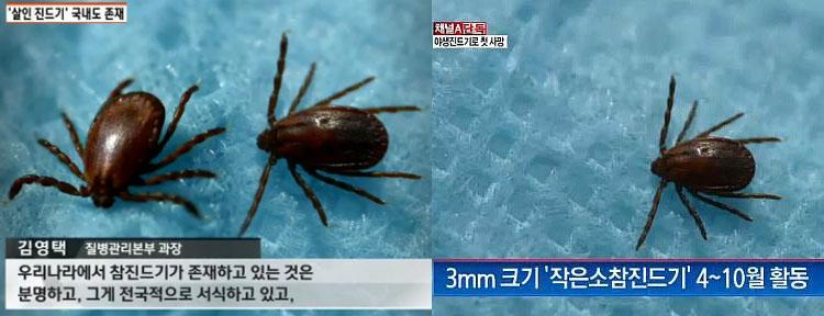 살인 야생 진드기 주의 애완동물에 의한 참진드기(살인진드기) 감염 사례 일본에서 첫 발견