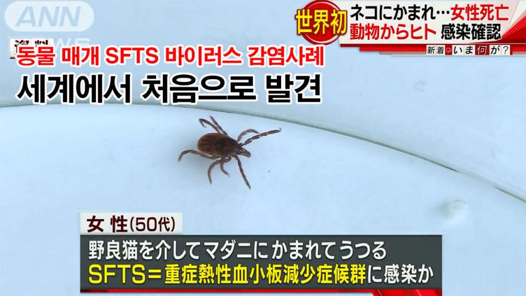 SFTS 바이러스 1024x576 애완동물에 의한 참진드기(살인진드기) 감염 사례 일본에서 첫 발견