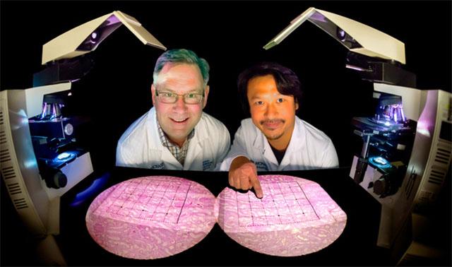 신장질환 일본인 신장질환에 걸리기 쉬워..염분 과다섭취, 비만에 주의