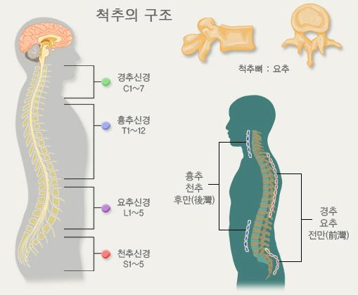 척추구조 요통완화 스트레칭 허리, 어깨통증 완화 가슴 스트레칭 및 요통예방 프라이멀 무브먼트
