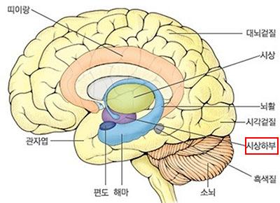 시상하부 식욕조절! 탄수화물이 땡기게 하는 시상하부의 신경세포