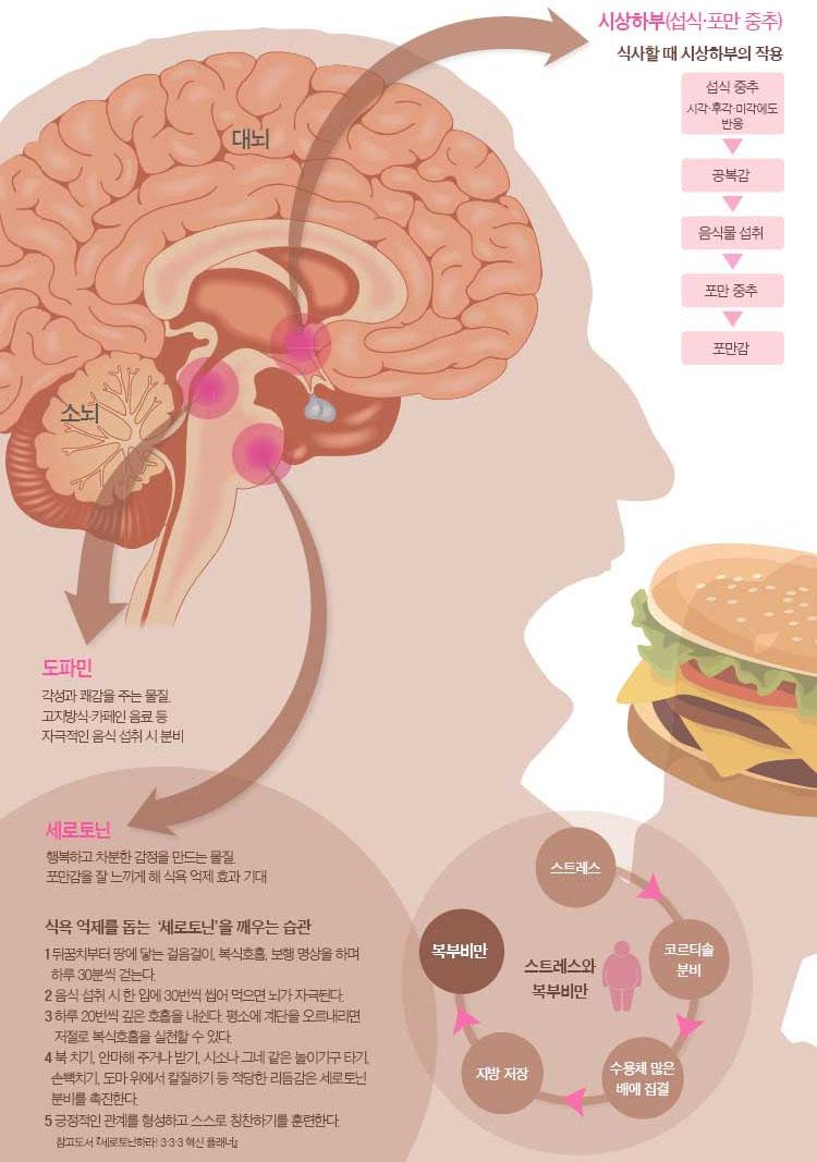 식욕억제 다이어트 식욕조절! 탄수화물이 땡기게 하는 시상하부의 신경세포