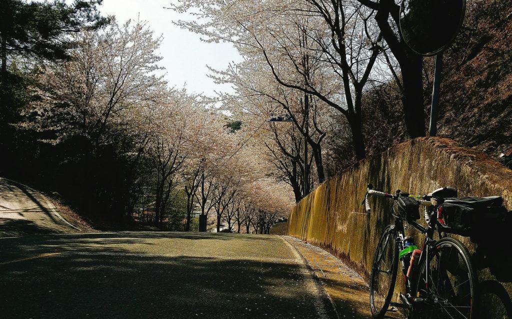 합천 황매산 벚꽃 자전거여행 1024x639 합천 황매산에서 가회면 경유 진주시까지 자전거여행