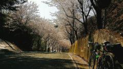 합천 황매산 벚꽃 자전거여행 240x135 일본 폭설로 교통마비! 적설량 예년의 10배