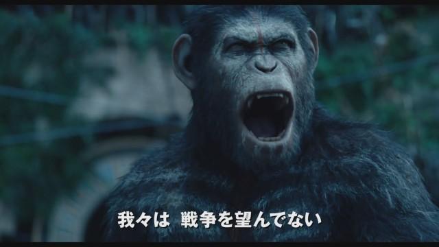 saru 원숭이 향해 쏜 총에 사람이 맞는 총기사고 발생