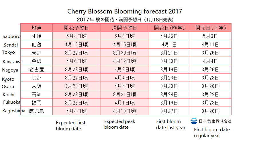 cherry blossom day 일본 벚꽃놀이 위한 개화시기, 만개 예정일