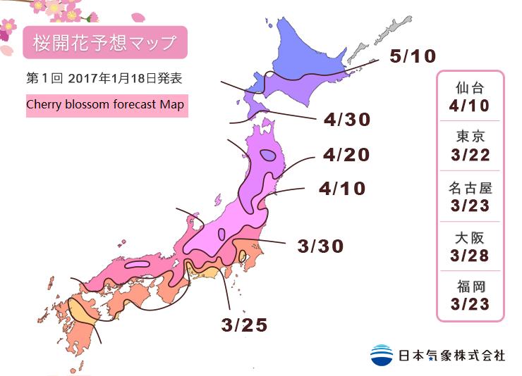cherry blossom forecast 일본 벚꽃놀이 위한 개화시기, 만개 예정일