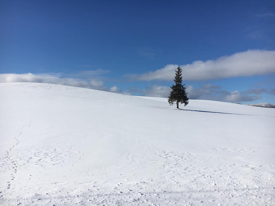 16122592 1668358956790758 9109510241929658368 n 홋카이도 인기 관광지 비에이의 설경! 흰수염폭포 등 명소 겨울풍경