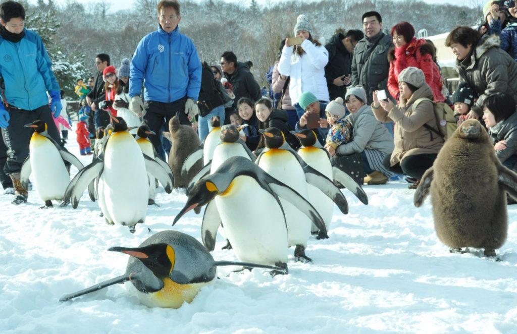 asahiyama zoo2 1024x662 홋카이도여행 아사히야마 동물원의 팽귄과 북극곰