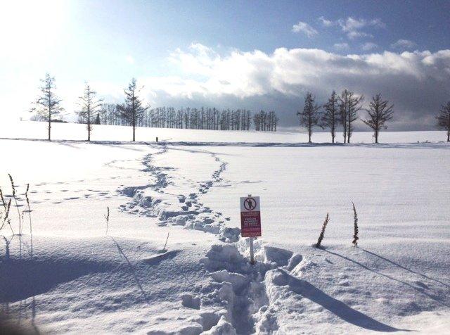 biei mild seven 홋카이도 인기 관광지 비에이의 설경! 흰수염폭포 등 명소 겨울풍경