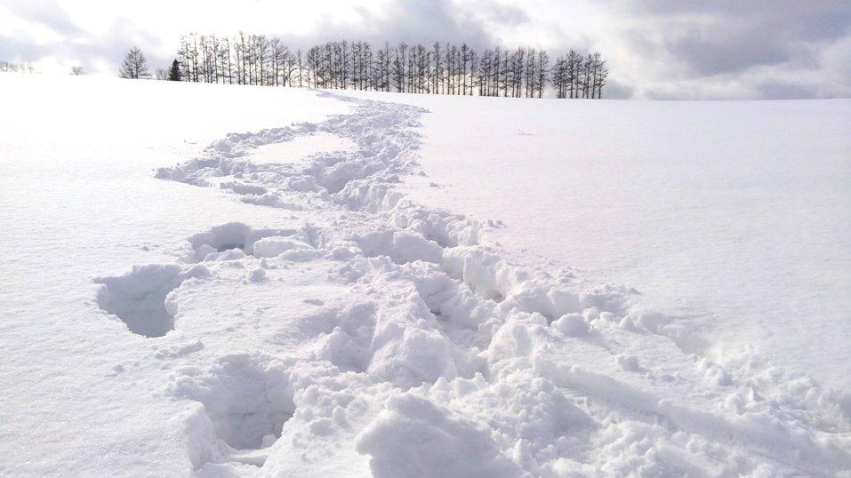 biei snow 홋카이도 인기 관광지 비에이의 설경! 흰수염폭포 등 명소 겨울풍경