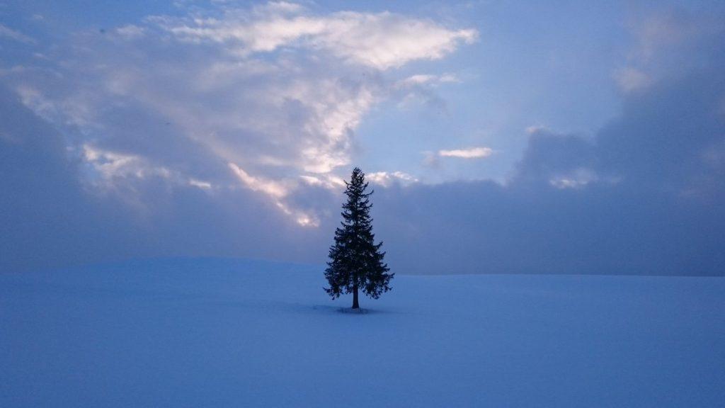 biei xmas tree 1024x576 홋카이도 인기 관광지 비에이의 설경! 흰수염폭포 등 명소 겨울풍경