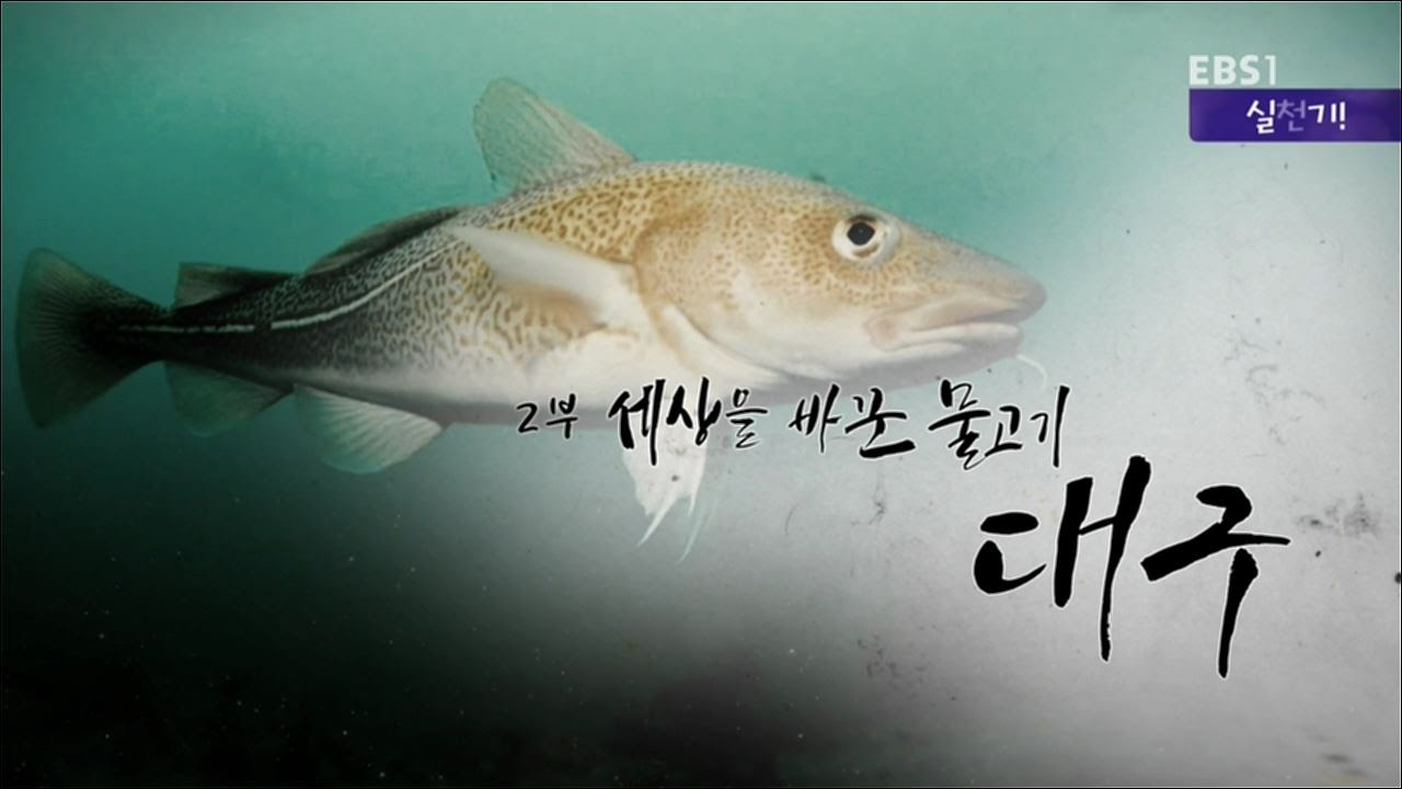 ebs docuprime fish EBS 다큐 생선의 종말   이서진 해설, 신이 된 물고기 참치, 대구, 연어