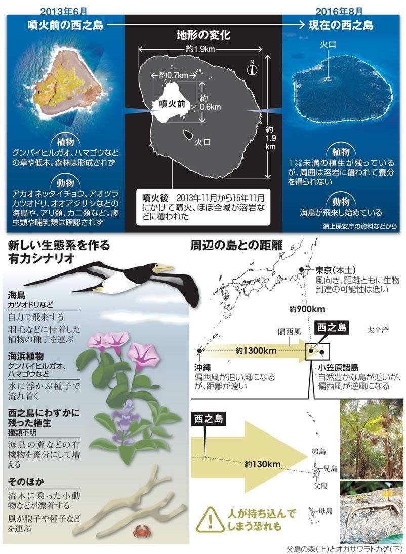 nishino island compare 오가사와라제도 니시노시마 화산분화로 면적확대 해도변경