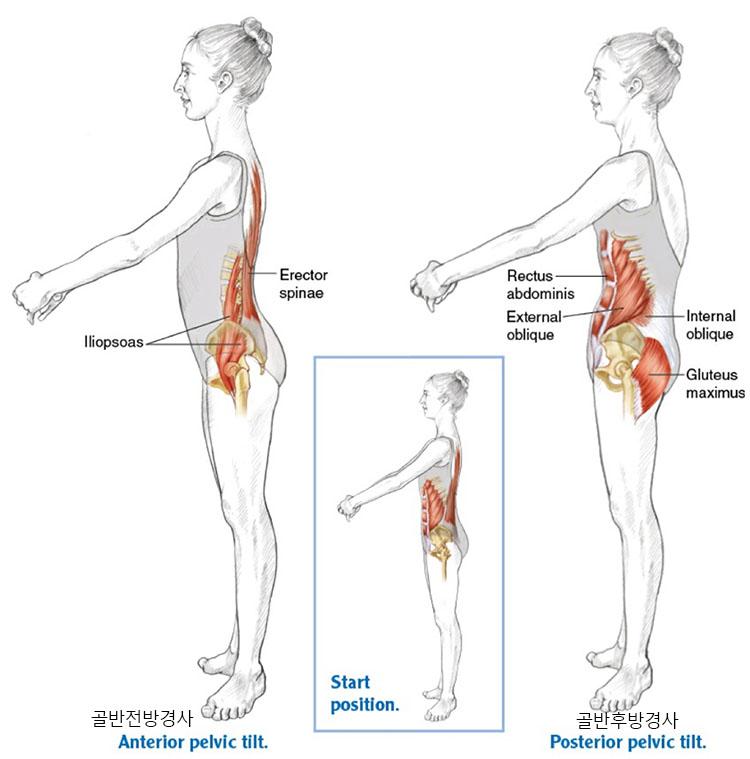 골반경사 요통 허리통증에 좋은 스트레칭 방법 5가지