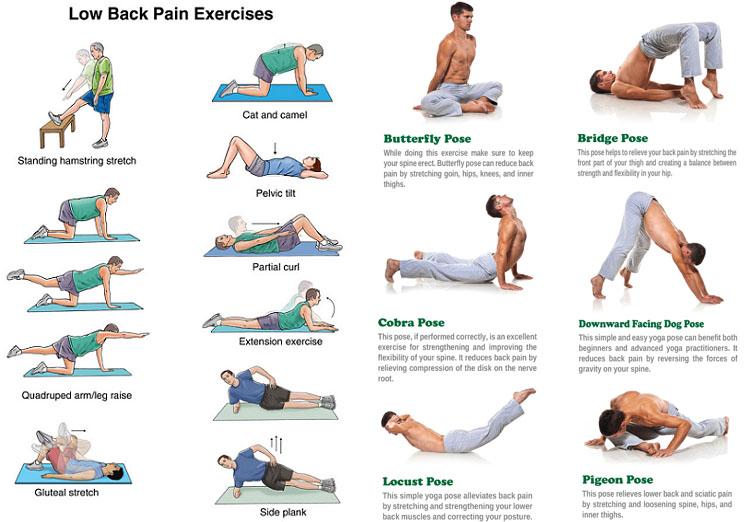 Low Back Pain Exercises 요통 허리통증에 좋은 스트레칭 방법 5가지