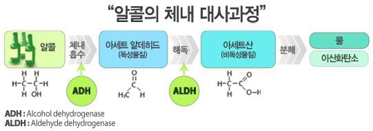 알콜대사 노화의 원인 당화(糖化), 탄수화물 외 음주와 밀접한 관련