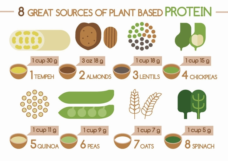 plant based fats and proteins 저탄수화물 식단은 기대수명을 단축시킨다